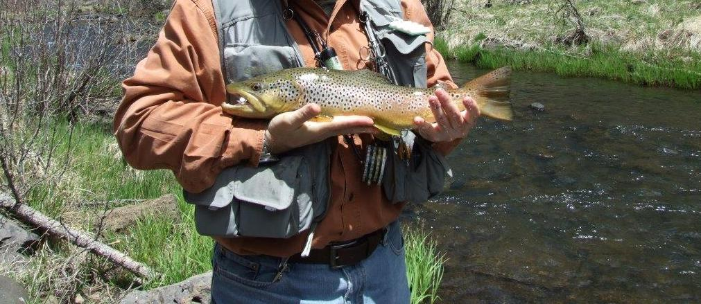 Arizona fly fishing forums view single post white for White mountain fishing report