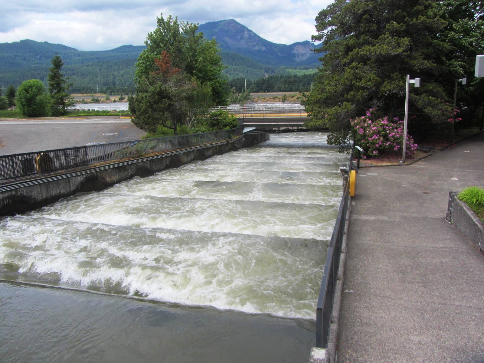 Fish_ladder_Bonneville_Dam_Columbia_River_Gorge