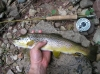5-23-09_fish_002.JPG