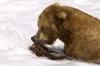 Bears_on_HD_D1-000031Blog.jpg