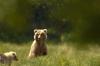 Bears_on_HD_D3-000021Blog.jpg