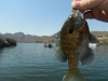 Bluegill_and_Todds_boat.jpg