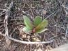 Desert_Growth.jpg