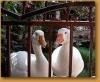 El_Encanto_s_Ducks.jpg