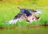 FlyTurkey2.jpg