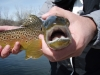 Fly_Fishing_058.jpg
