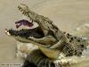 Hungry_Croc.jpg