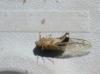 LF_Cicada_2.jpg