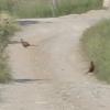 PheasantRoad2.jpg
