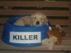 Redd_in_KILLER_bowl.jpg