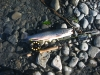Upper_Kenai_R_Alaska_Aug_27_2006_0_.JPG
