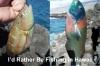 Web_id_rather_be_fishing_in_hawaii.jpg