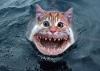 catshark.jpg