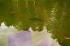 clear_water.jpg