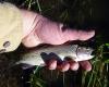 culvertfish.jpg