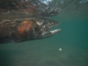undewater_fish2.jpg