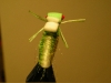 cicada13.jpeg