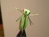 cicada14.jpeg